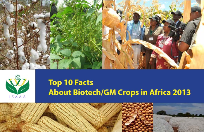 Top Ten Facts About Biotech/GM Crops in Africa 2013