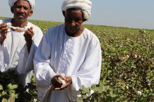 AfriCenter Participates in a Study Tour to Sudan Bt Cotton Fields