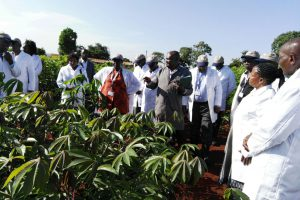 Out of the Board room into the Fields: Kenya's Biosafety Board and Appeals Board Assess Country's Capacity