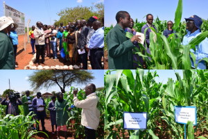Pests, Drought and Empty Plates: Kenyan Farmers Call on Government to Lift GMO Ban