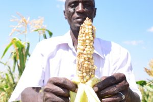 Kenyan Farmers Urge Government to Expedite Release of GM Maize