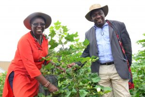 Kenyan Policy Makers Vouch for Commercialization of Bt Cotton