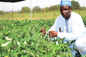 Prof. Ishayaku: Nigeria's Approval of Bt Cowpea Signifies Africa's Capacity to Adopt Biotech Crops