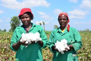 New Dawn for Cotton Farmers as Kenyan Cabinet Approves Bt Cotton Commercialization